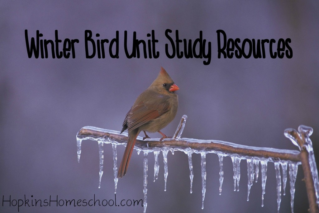 Winter Bird Unit Study